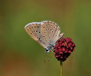 flora-en-fauna