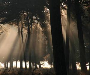 bosbeheer-foret