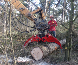 houtgrijper