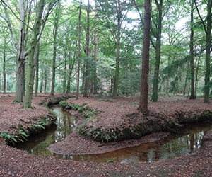 meander-de-baest